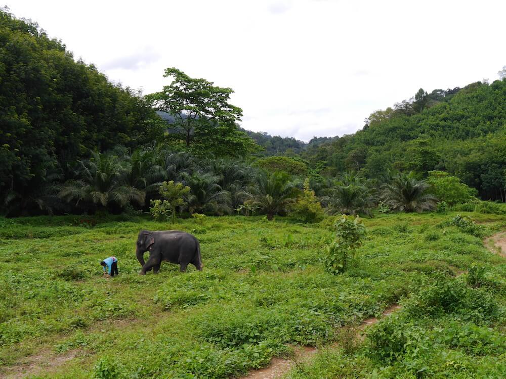 Khao Sok Elefant