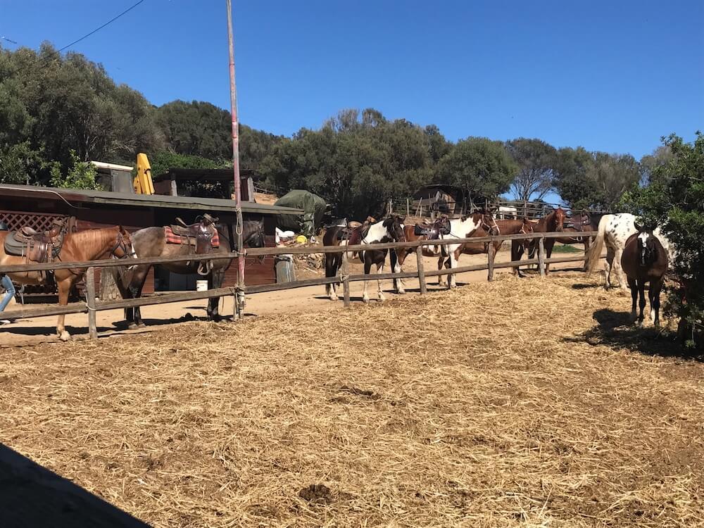 Sardinien Pferderanch