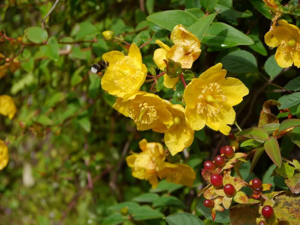 Biene Garten Schottland