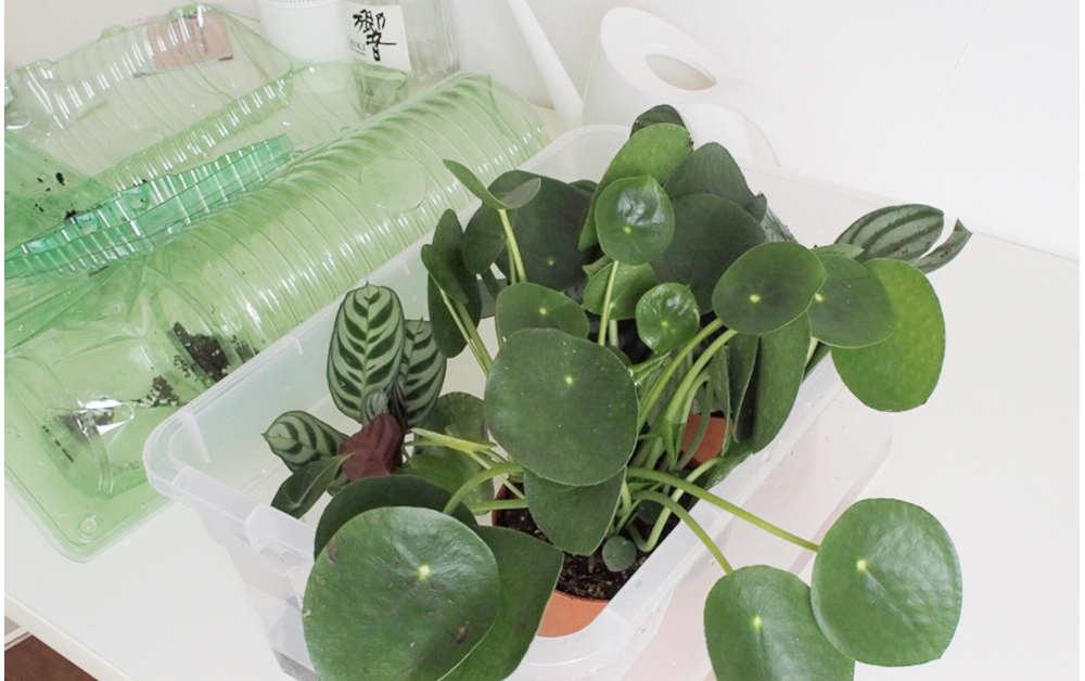 Online Babyplants Bestellung