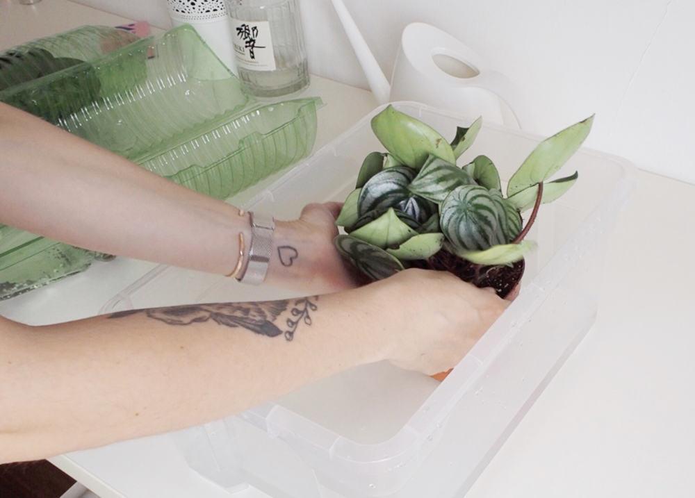 Online Babyplants Versand und Verpackung