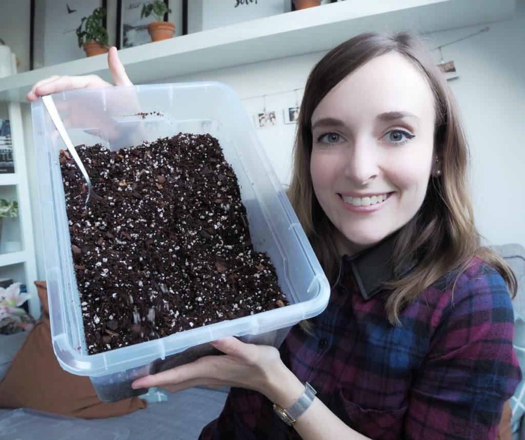 Substrat für Zimmerpflanzen selber herstellen