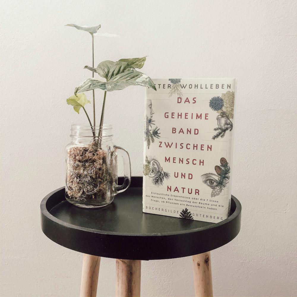 Das geheime Band zwischen Mensch und Natur Peter Wohlleben Büchergilde