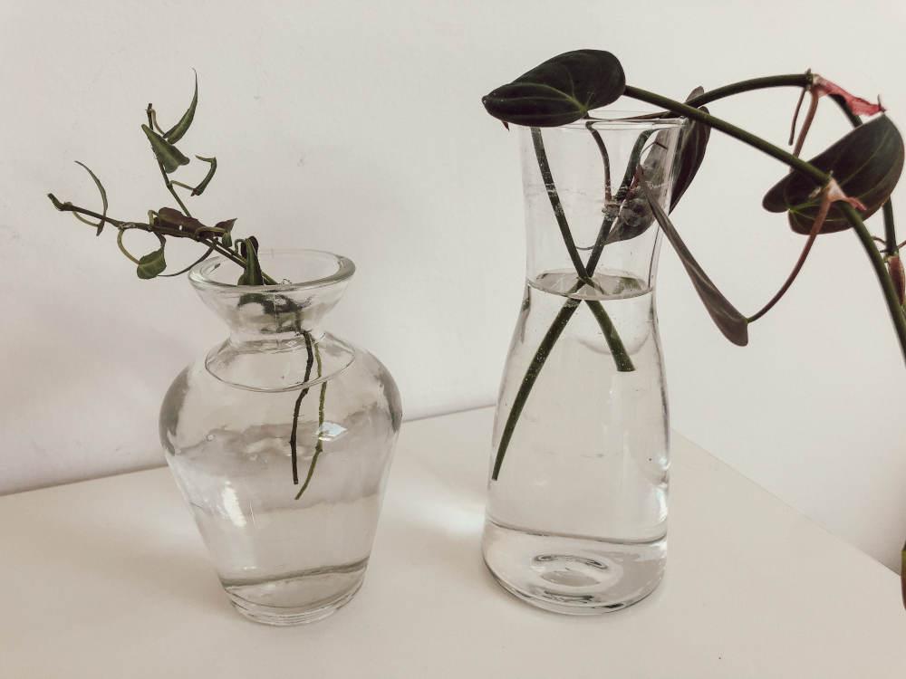 Pflanzenableger in Wasser