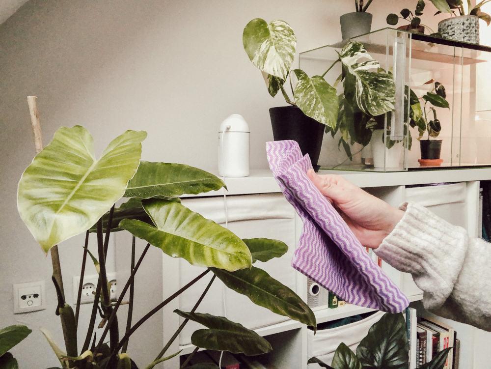 Zimmerpflanzen abwischen