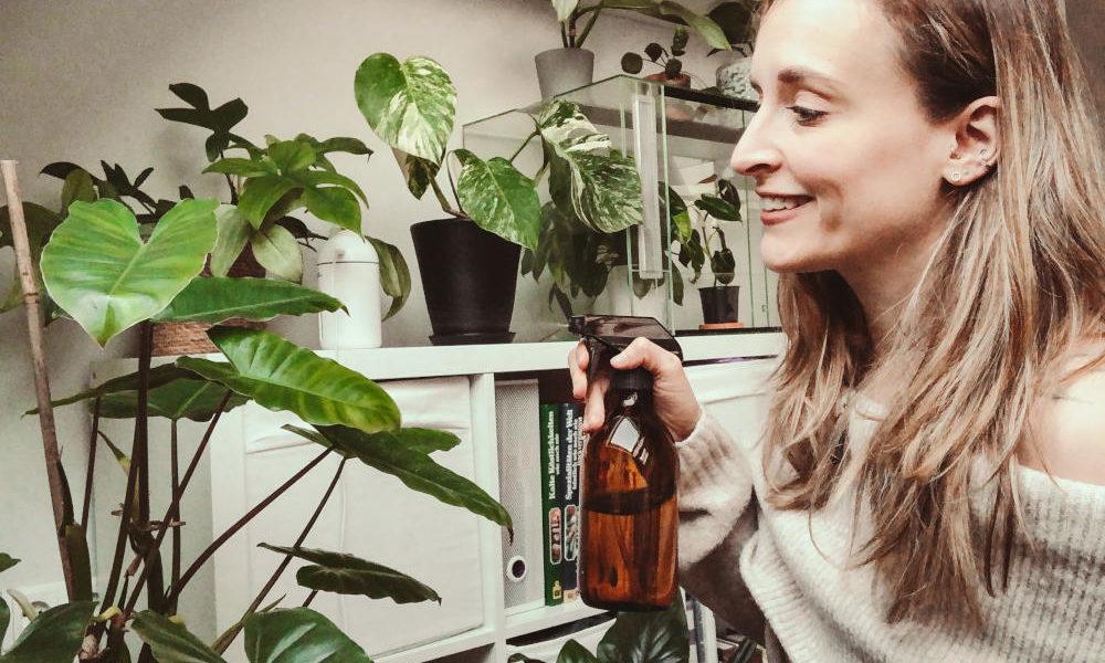 Zimmerpflanzen besprühen