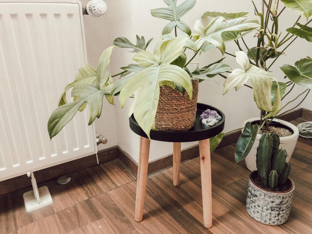 Zimmerpflanzen Pflanzenhocker