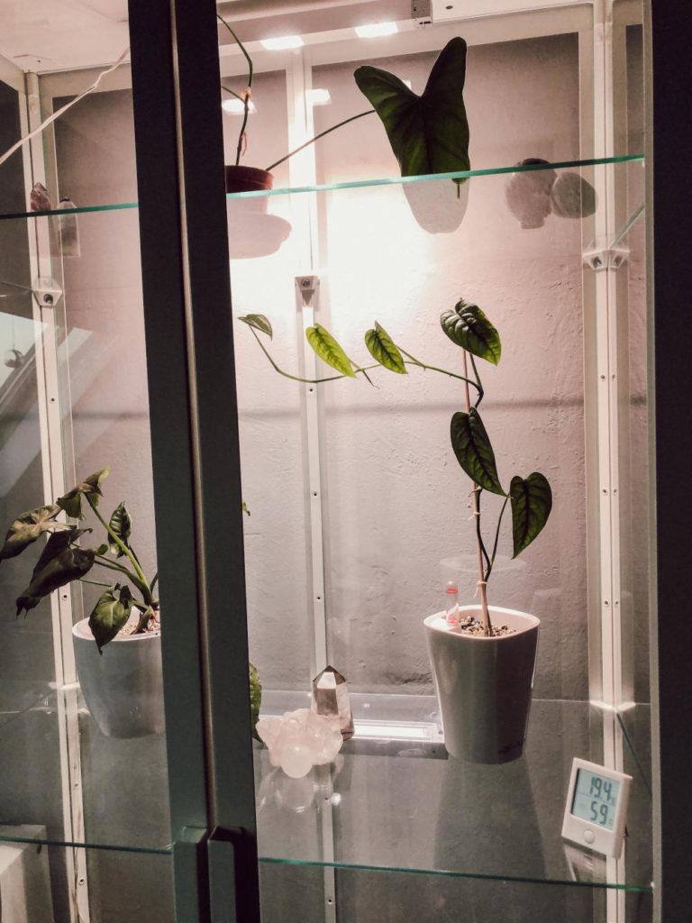Zimmerpflanzen Vitrine